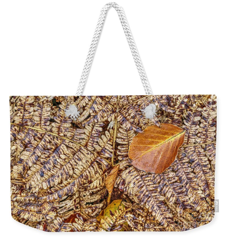 Autumn Weekender Tote Bag featuring the photograph Dried Leaf On The Fern by Michal Boubin