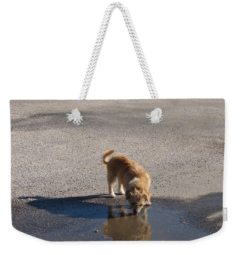 Dog Weekender Tote Bag featuring the photograph Drinking Enough For Reflection And Shadow by J R  Seymour