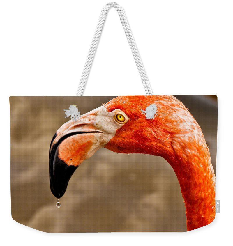 Flamingo Weekender Tote Bag featuring the photograph Dripping Flamingo by Christopher Holmes