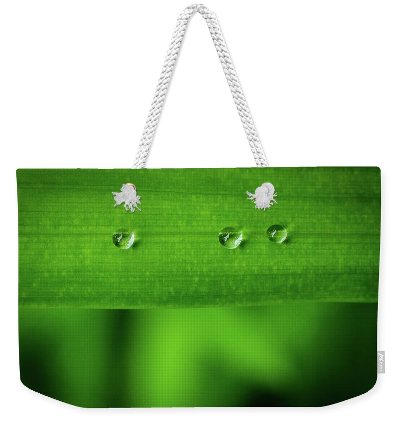Nature Weekender Tote Bag featuring the photograph Droplets On Grass by Steven Ford