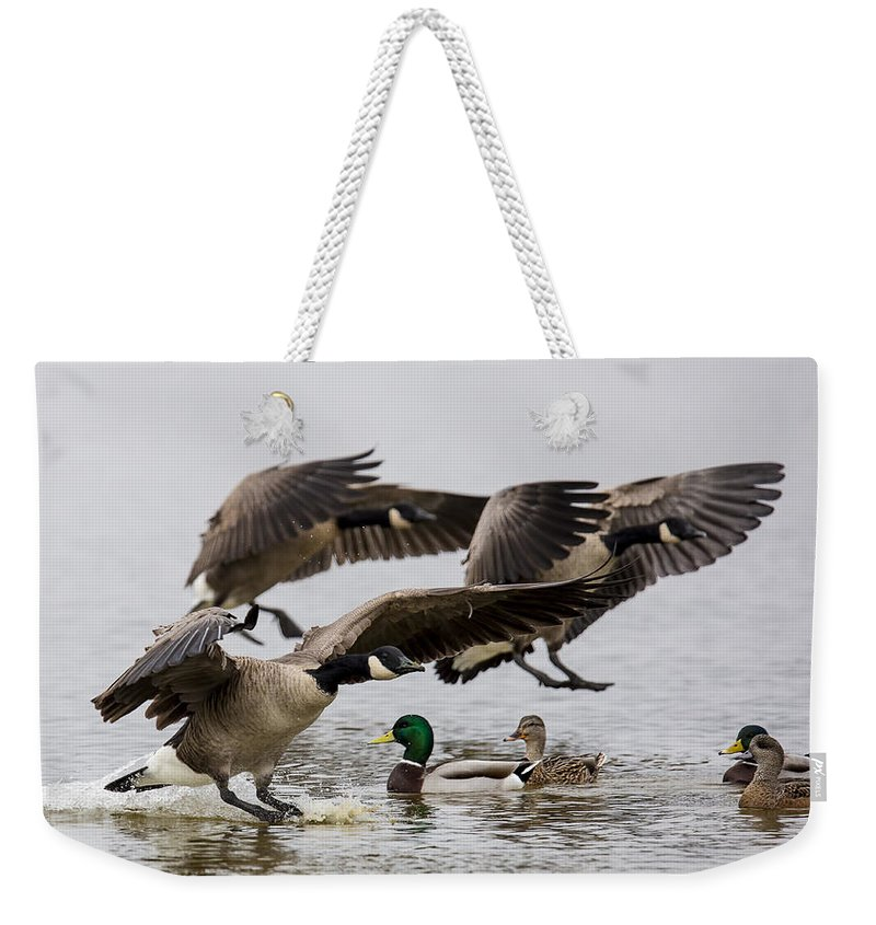 Canada Goose Weekender Tote Bag featuring the photograph Duck Ducks by Randy Hall