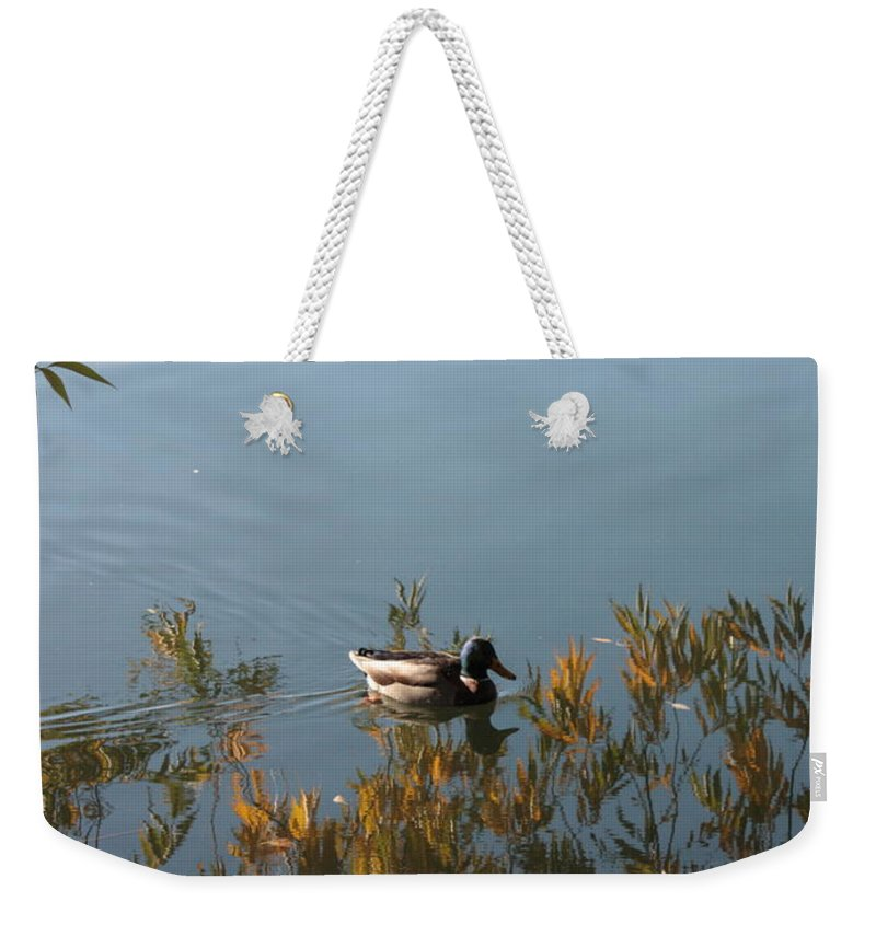 Autumn Weekender Tote Bag featuring the photograph Duck On Golden Pond by Carol Groenen