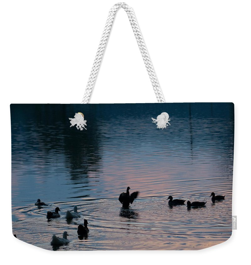 Cumberand Weekender Tote Bag featuring the photograph Duck Show Off by Douglas Barnett