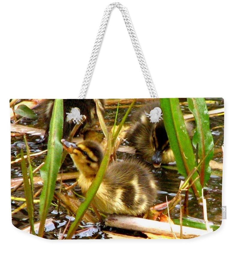 Duck Weekender Tote Bag featuring the photograph Ducklings 1 by J M Farris Photography