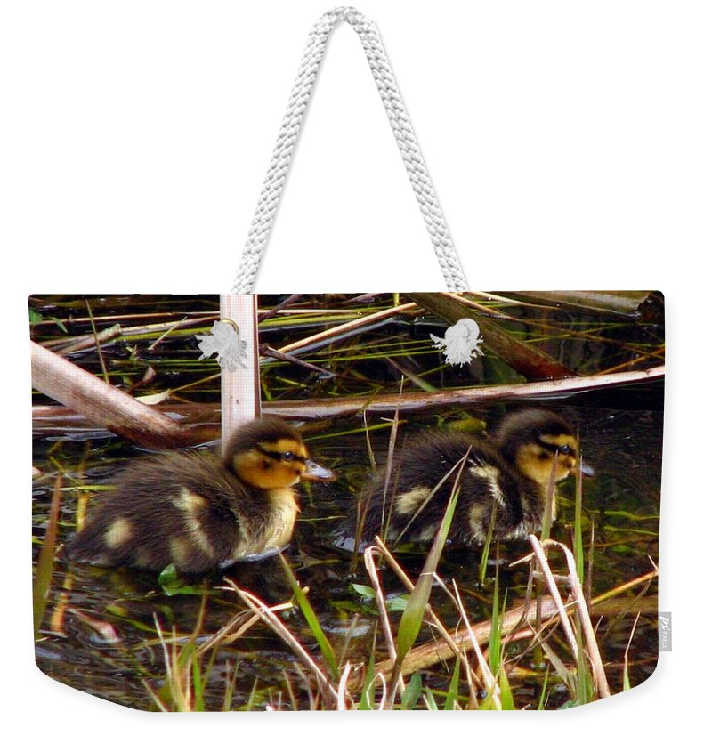 Duck Weekender Tote Bag featuring the photograph Ducklings 2 by J M Farris Photography