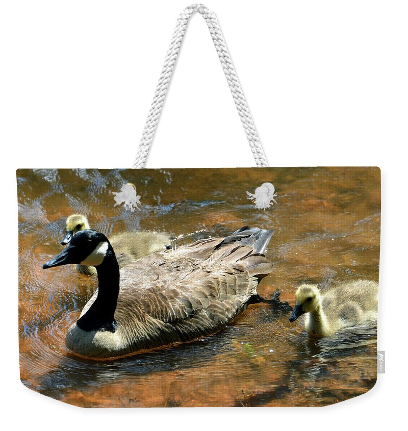 Ducks Weekender Tote Bag featuring the photograph Duck Family by David Lee Thompson