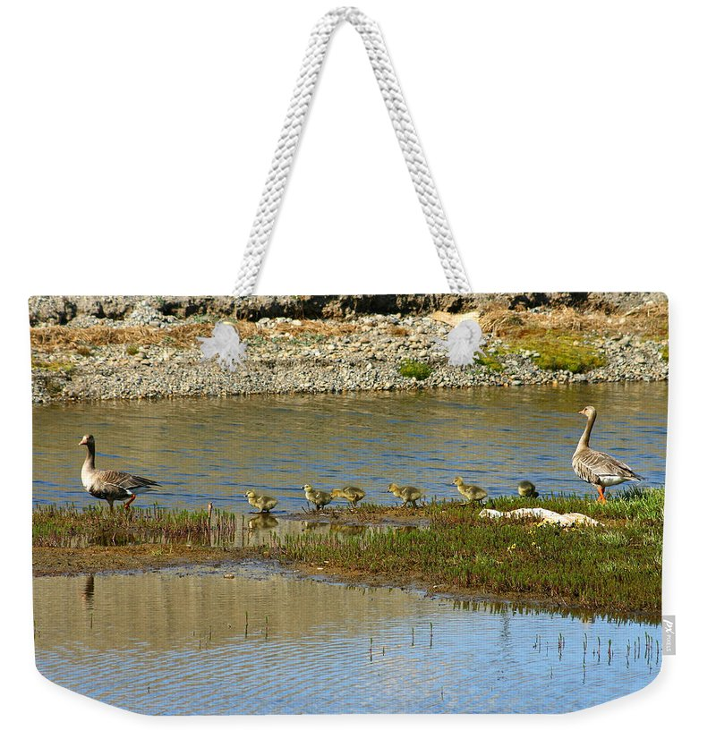 Ducks Weekender Tote Bag featuring the photograph Ducks In A Row by Anthony Jones