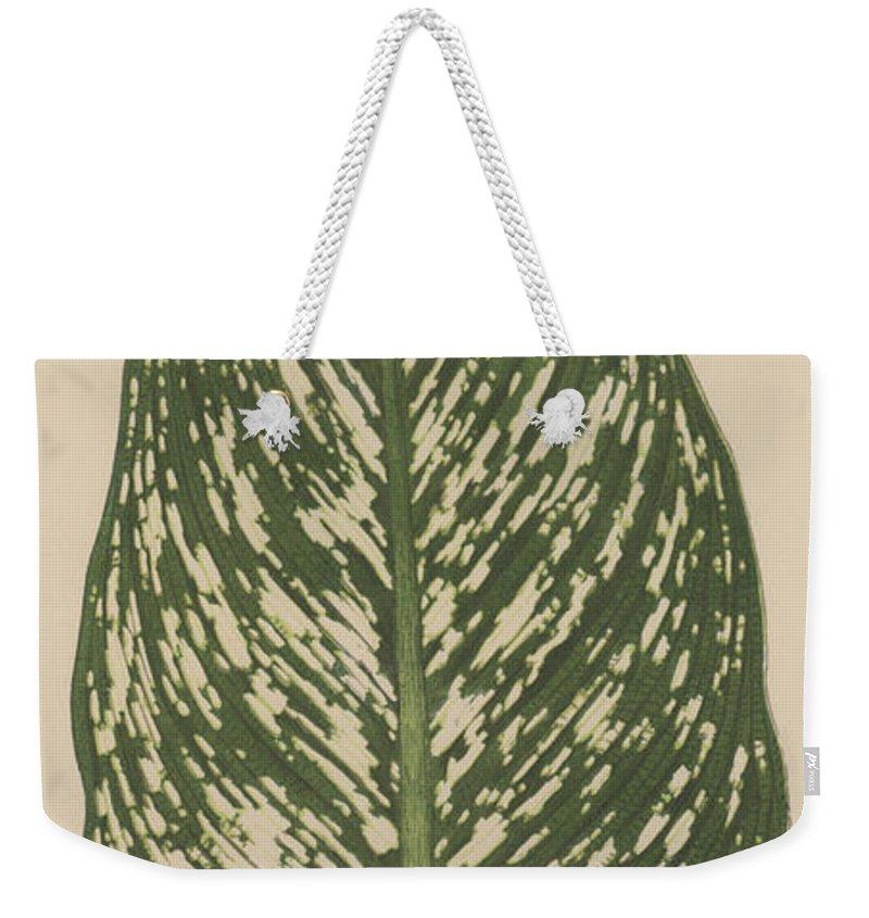 Leaf Weekender Tote Bag featuring the painting Dumbcane by English School