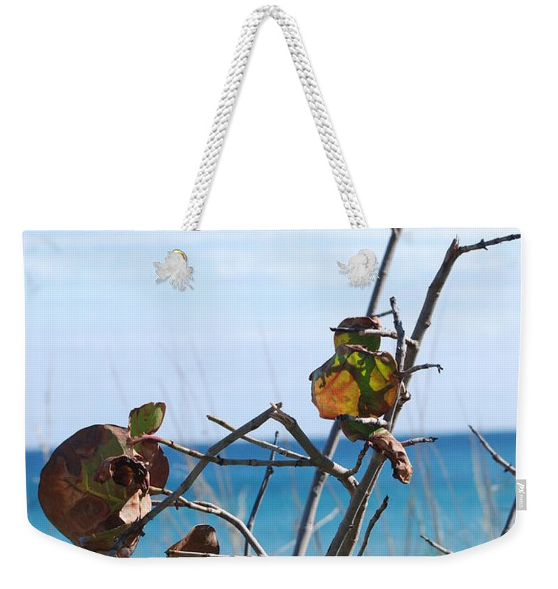 Ocean Weekender Tote Bag featuring the photograph Dune Plants by Rob Hans
