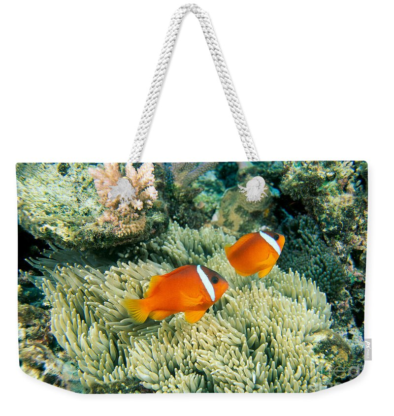 Amphiprion Melanopus Photographs Weekender Tote Bags
