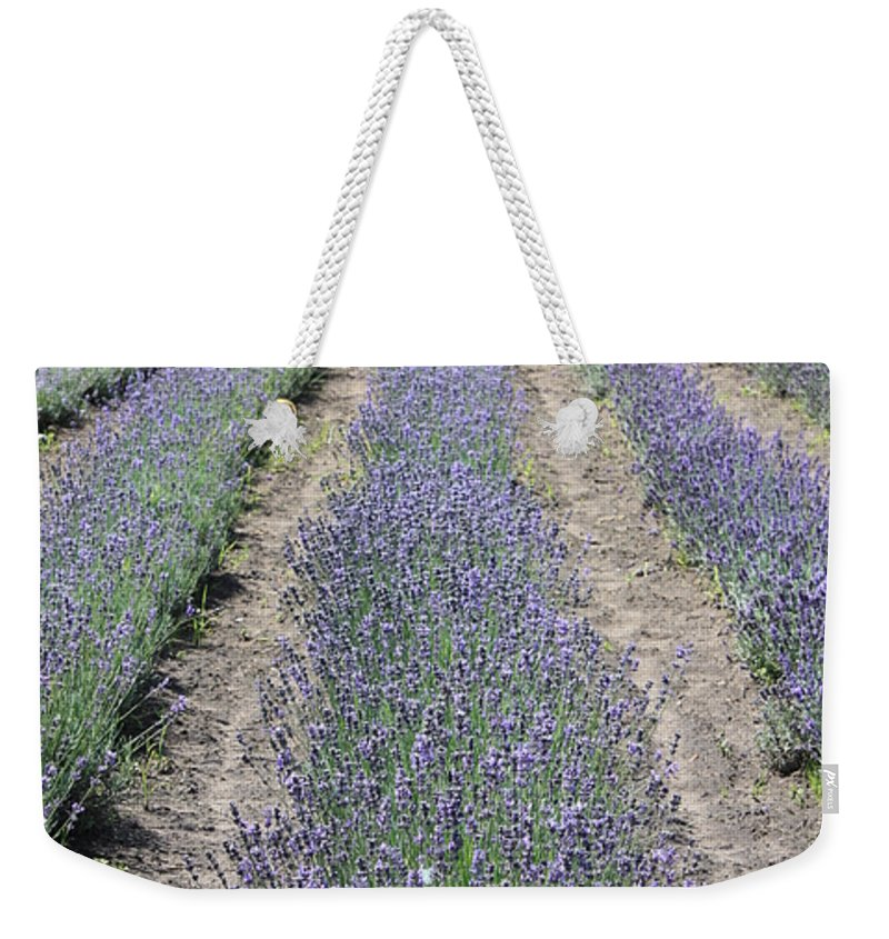 Lavender Weekender Tote Bag featuring the photograph Dutch Lavender Field by Carol Groenen