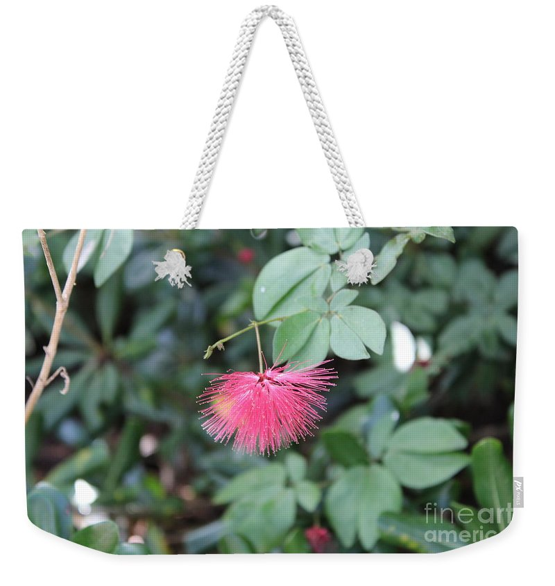 Flower Weekender Tote Bag featuring the photograph Dwarf Powder Puff Flower by Tracy