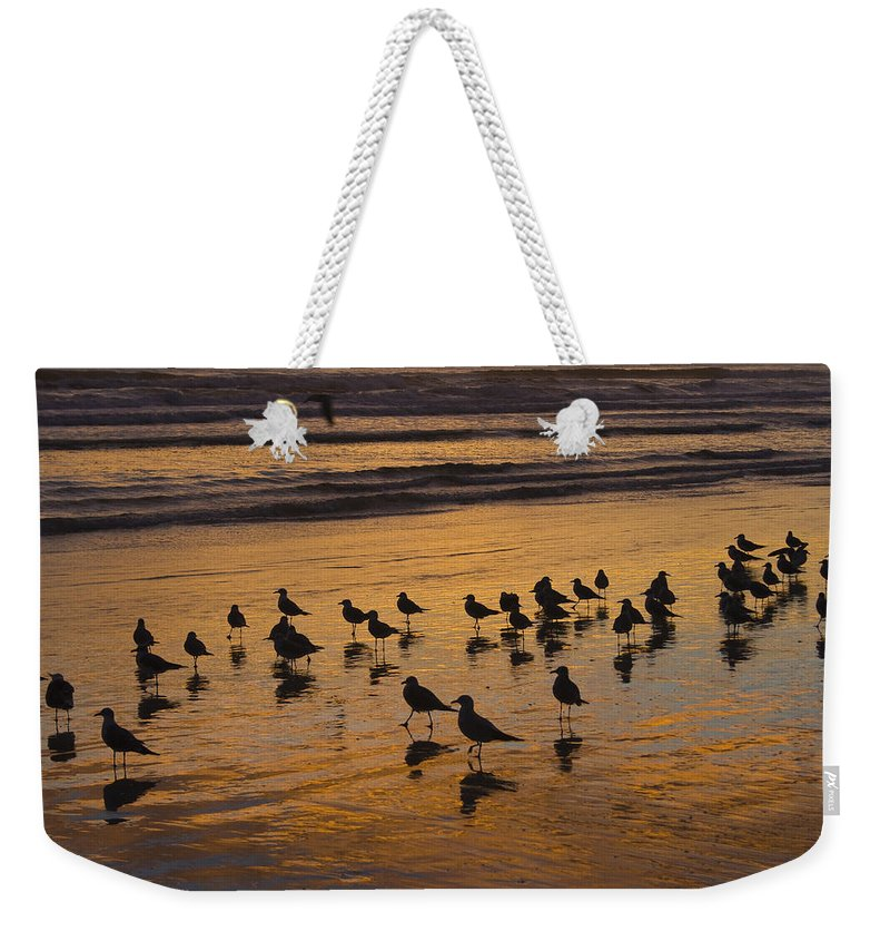 Beach Ocean Seagull Gull Bird Birds Sand Wave Waves Sun Sunrise Reflection Shaddow Sky Cloud Weekender Tote Bag featuring the photograph Eager Anticipation by Andrei Shliakhau