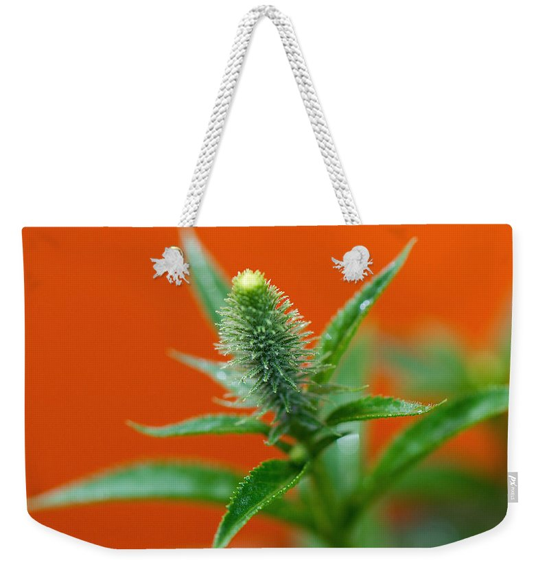 Orange Weekender Tote Bag featuring the photograph Eager For Orange by Lisa Knechtel