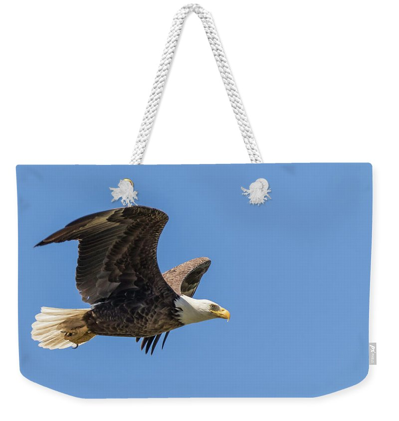 Eagle Weekender Tote Bag featuring the photograph Eagle In Flight by Tony Fruciano