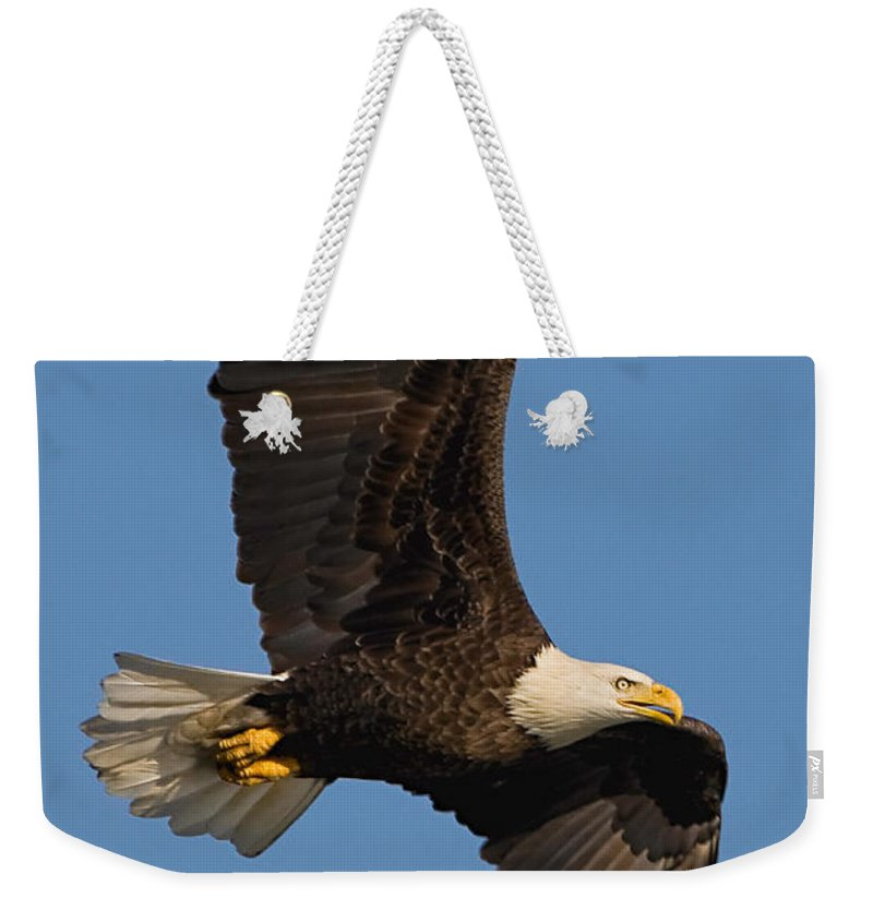 Eagle Weekender Tote Bag featuring the photograph Eagle In Sunlight by William Jobes