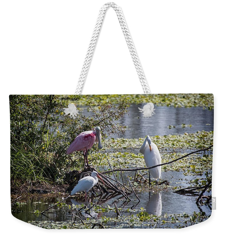 Florida Weekender Tote Bag featuring the photograph Eagle Lakes Park - Roseate Spoonbill And Friends, Socializing by Ronald Reid