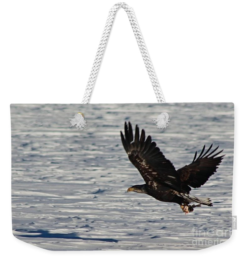 Eagle Weekender Tote Bag featuring the photograph Eagle_7894 by Joseph Marquis