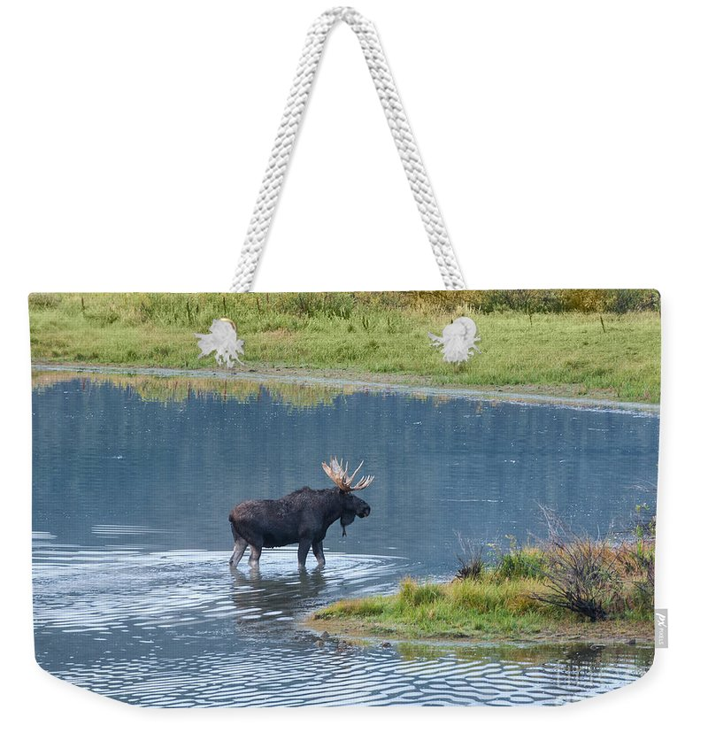 Grand Teton National Park Weekender Tote Bag featuring the photograph Early Morning Crossing In Grand Teton by Sandra Bronstein