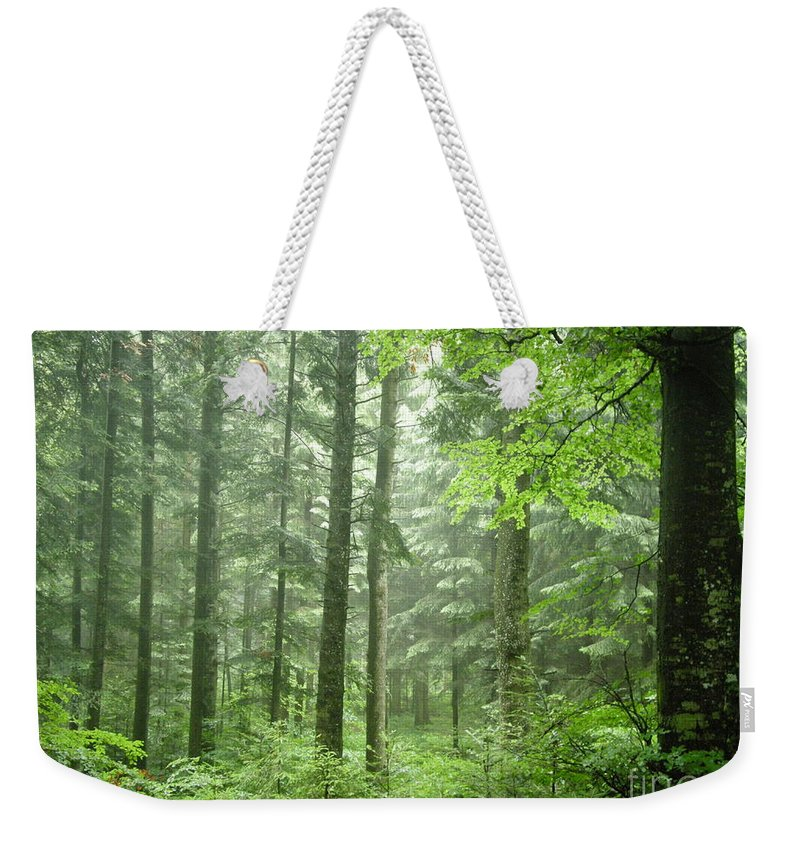 Nature Weekender Tote Bag featuring the photograph Early Morning In Swiss Forest by Mikhael van Aken
