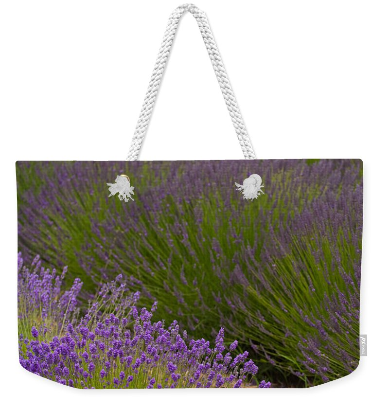 Lavender Weekender Tote Bag featuring the photograph Early Morning Lavender by Mike Reid