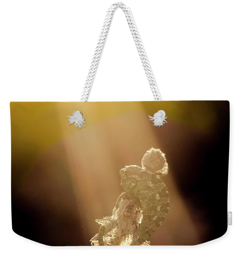Animal Weekender Tote Bag featuring the photograph Early Morning Sun Bath by Arik Baltinester
