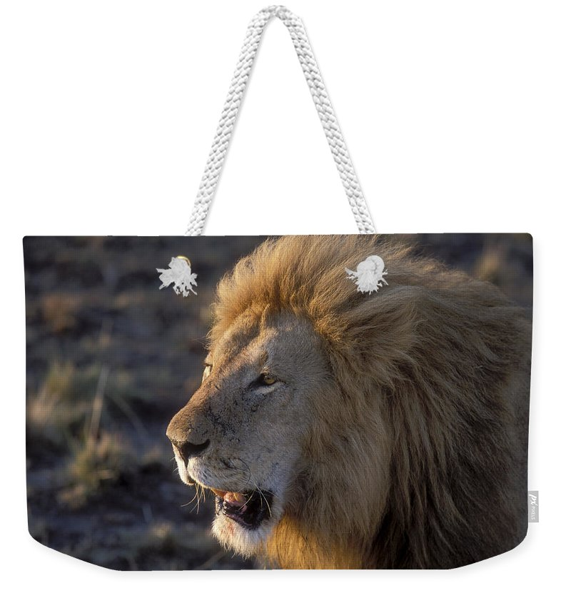 Lion Weekender Tote Bag featuring the photograph Early Morning Warning by Sandra Bronstein