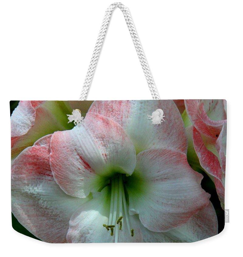 Amaryllis Weekender Tote Bag featuring the photograph Easter Amaryllis by Barbara Bowen