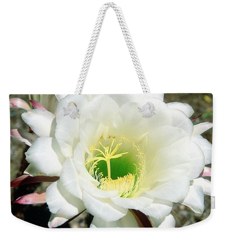 Wildflowers Weekender Tote Bag featuring the photograph Easter Lily Cactus Flower by Kathy McClure
