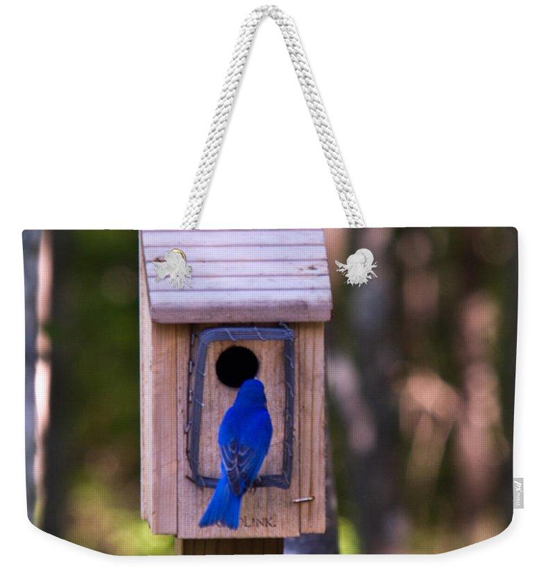 Cumberland Weekender Tote Bag featuring the photograph Eastern Bluebird Entering Home by Douglas Barnett