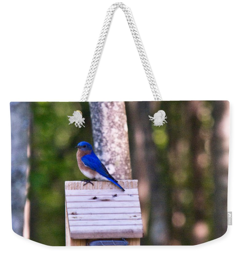 Sialia Weekender Tote Bag featuring the photograph Eastern Bluebird Perched On Birdhouse 2 by Douglas Barnett