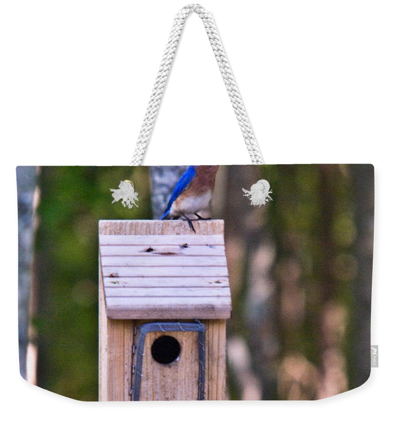 Cumberand Weekender Tote Bag featuring the photograph Eastern Bluebird Perched On Birdhouse 3 by Douglas Barnett