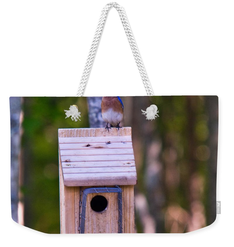 Cumberand Weekender Tote Bag featuring the photograph Eastern Bluebird Perched On Birdhouse 4 by Douglas Barnett
