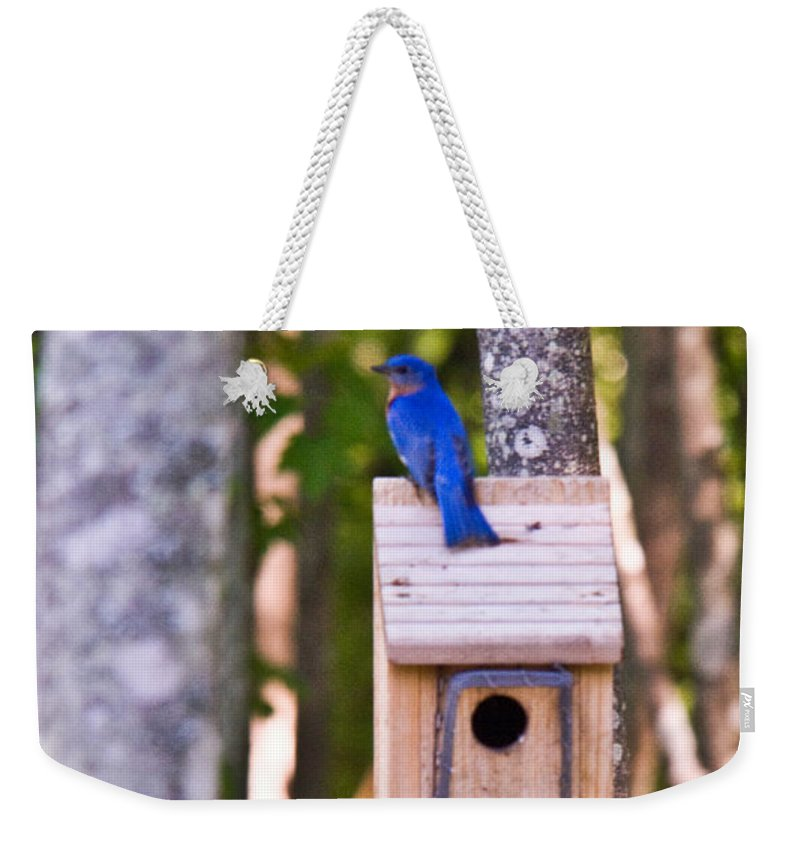 Cumberand Weekender Tote Bag featuring the photograph Eastern Bluebird Perched On Birdhouse by Douglas Barnett