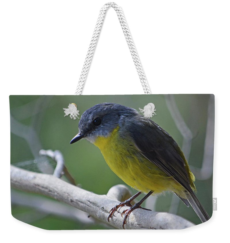 Robin Weekender Tote Bag featuring the photograph Eastern Yellow Robin by Peter Krause