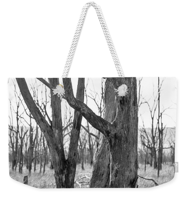 Trees Weekender Tote Bag featuring the photograph Echoes Of The Past by Linda Lees