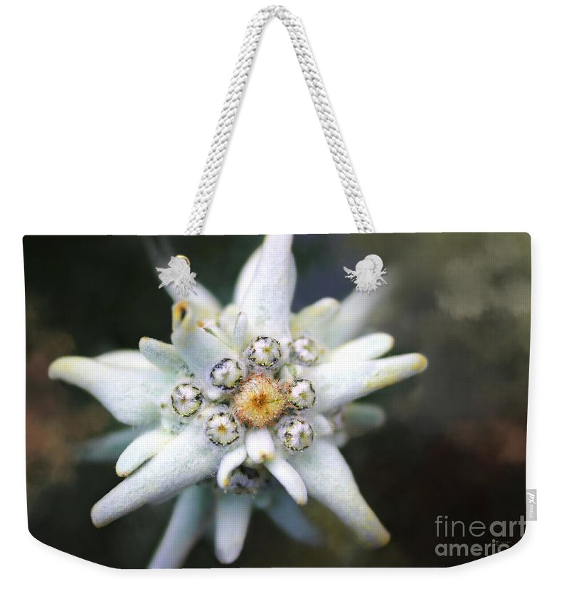 Photo Weekender Tote Bag featuring the photograph Edelweiss by Jutta Maria Pusl
