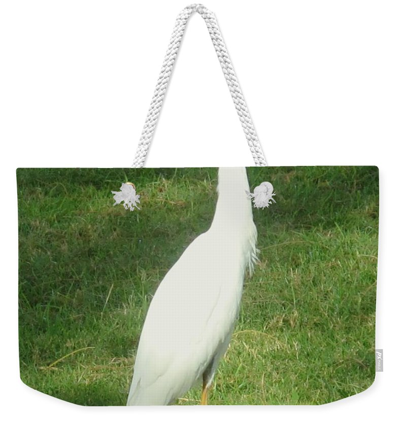 Egret Weekender Tote Bag featuring the photograph Egret Posing by Ian MacDonald