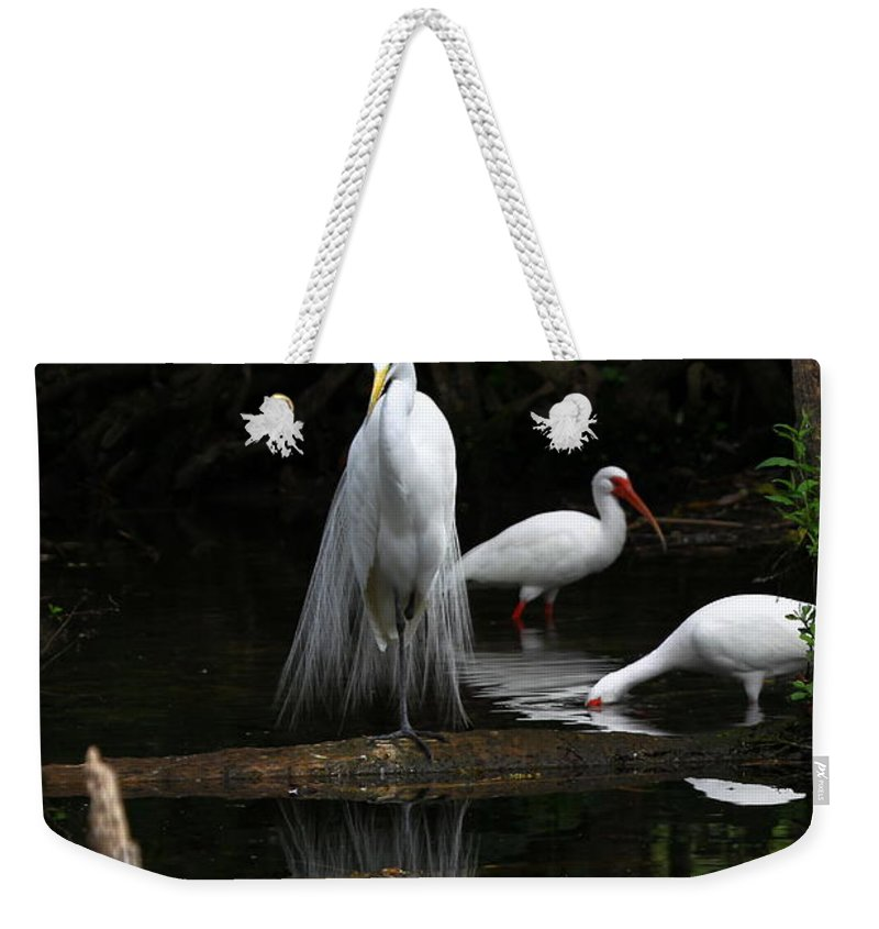 Great White Egret Weekender Tote Bag featuring the photograph Egret Reflection by Barbara Bowen