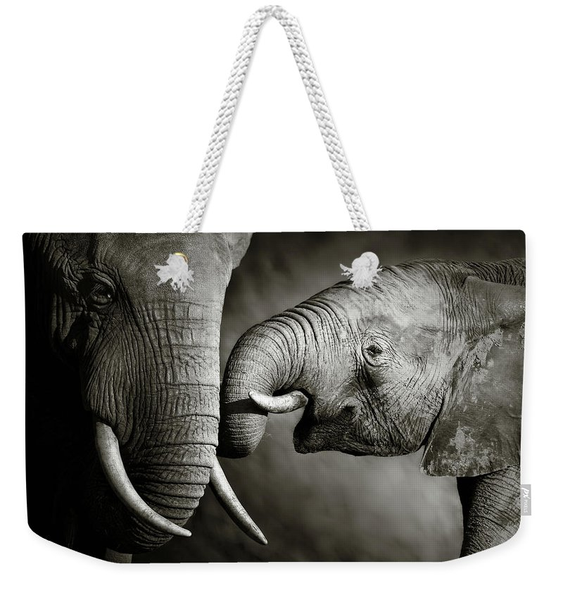 Elephant; Interact; Touch; Gently; Trunk; Young; Large; Small; Big; Tusk; Together; Togetherness; Passionate; Affectionate; Behavior; Art; Artistic; Black; White; B&w; Monochrome; Image; African; Animal; Wildlife; Wild; Mammal; Animal; Two; Moody; Outdoor; Nature; Africa; Nobody; Photograph; Addo; National; Park; Loxodonta; Africana; Muddy; Caring; Passion; Affection; Show; Display; Reach Weekender Tote Bag featuring the photograph Elephant Affection by Johan Swanepoel