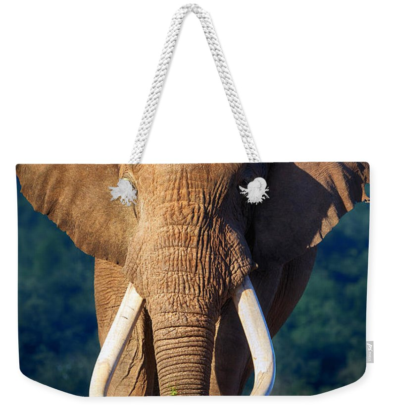 Elephant Weekender Tote Bag featuring the photograph Elephant Approaching by Johan Swanepoel