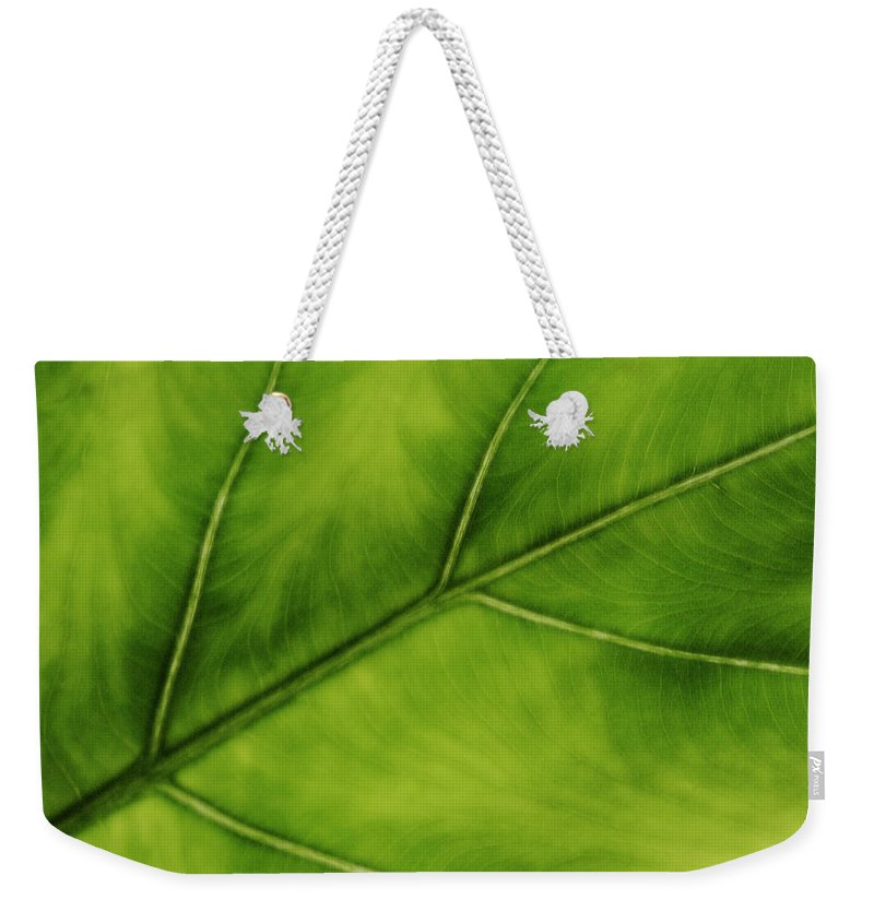 Leaf Weekender Tote Bag featuring the photograph Elephant Ear by Marilyn Hunt