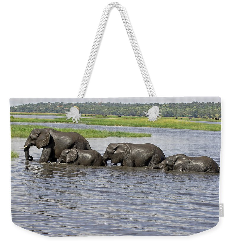 Elephants Crossing River Weekender Tote Bag featuring the photograph Elephants Crossing Chobe River by Tony Murtagh