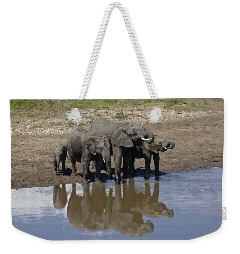 Africa Weekender Tote Bag featuring the photograph Elephants In The Mirror by Michele Burgess