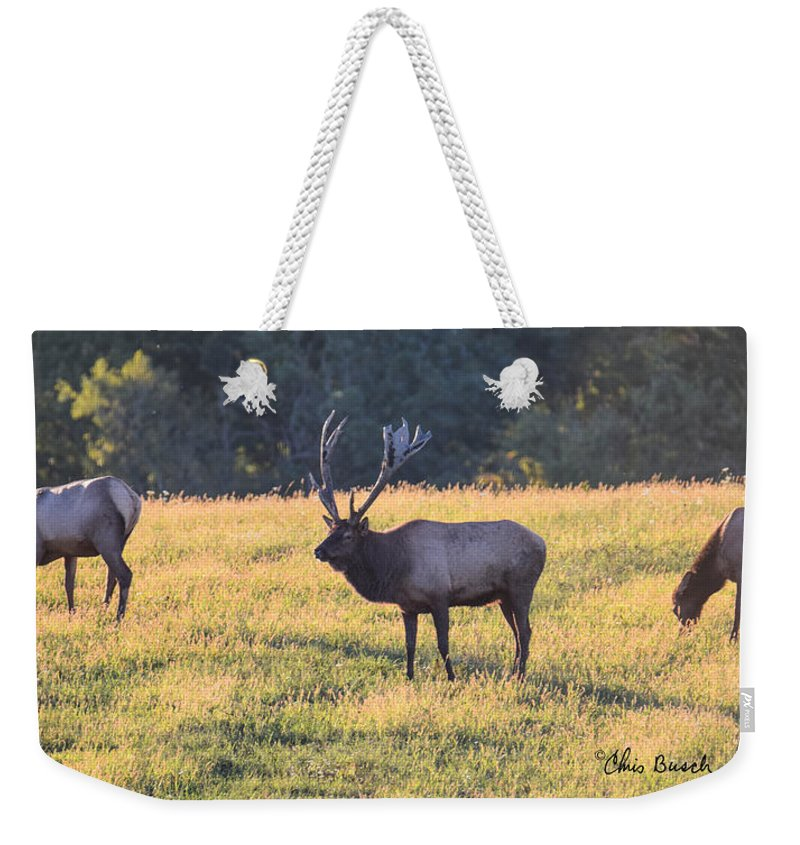 Benezette Weekender Tote Bag featuring the photograph Elk At Sunset by Chris Busch