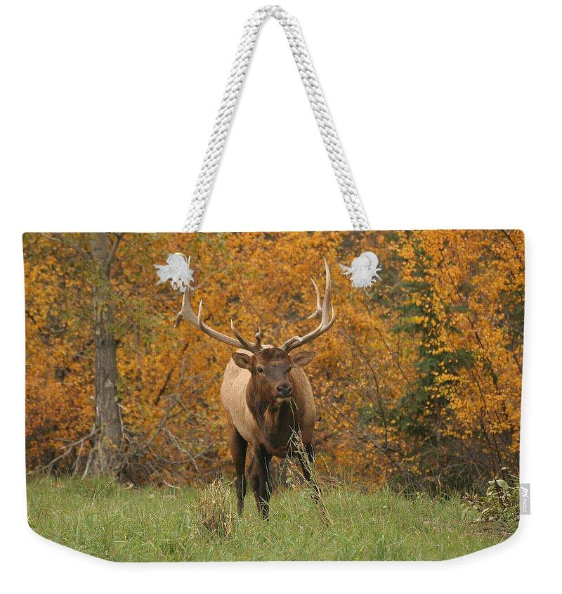 Elk Weekender Tote Bag featuring the photograph Elk by Doris Potter
