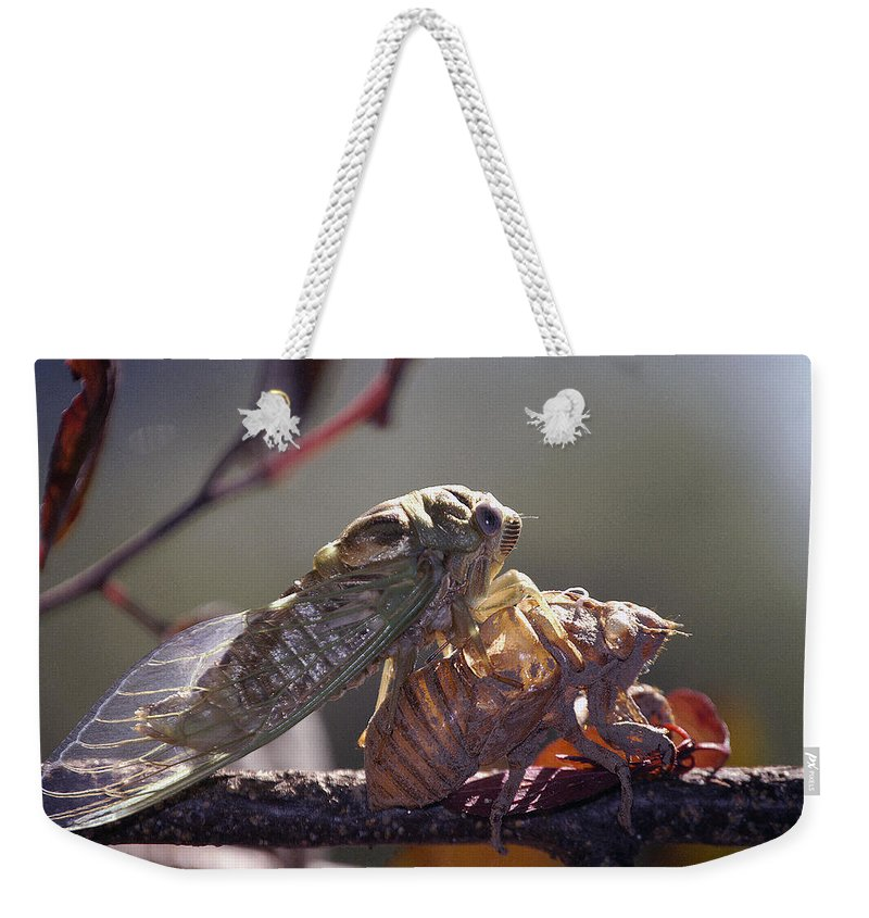 Cicada Weekender Tote Bag featuring the photograph Emerging - Cicada 1 by D'Arcy Evans