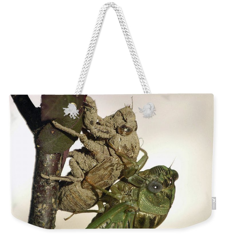 Nature Weekender Tote Bag featuring the photograph Emerging - Cicada 2 by D'Arcy Evans