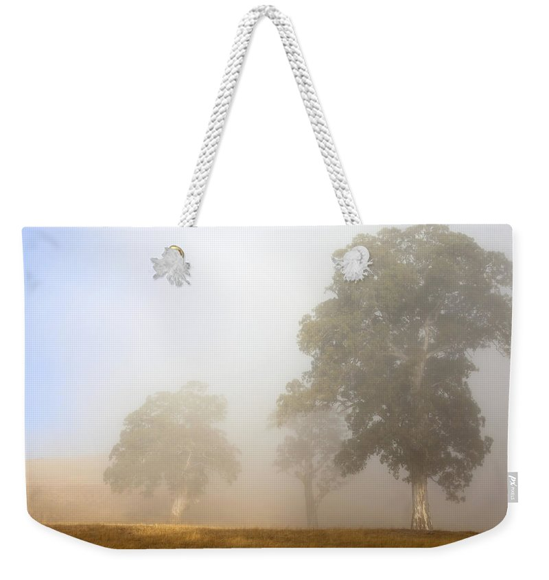 Gum Tree Weekender Tote Bag featuring the photograph Emerging From The Fog by Mike Dawson