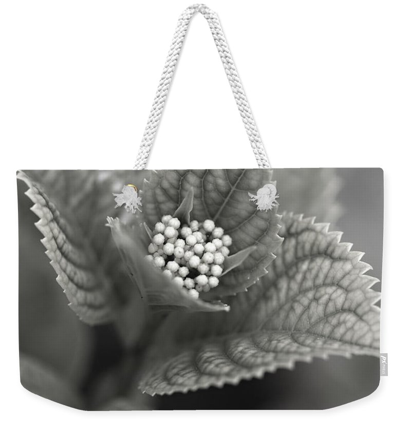 Flower Weekender Tote Bag featuring the photograph Emerging Hydrangea by Marilyn Hunt